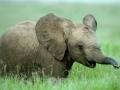 18-elefante