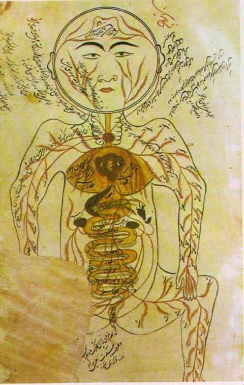 Anatomia humana, por Avicena.