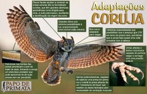 adaptacoes_coruja