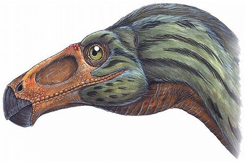 "O ""bico"" do Erlikosaurus andrewsi."